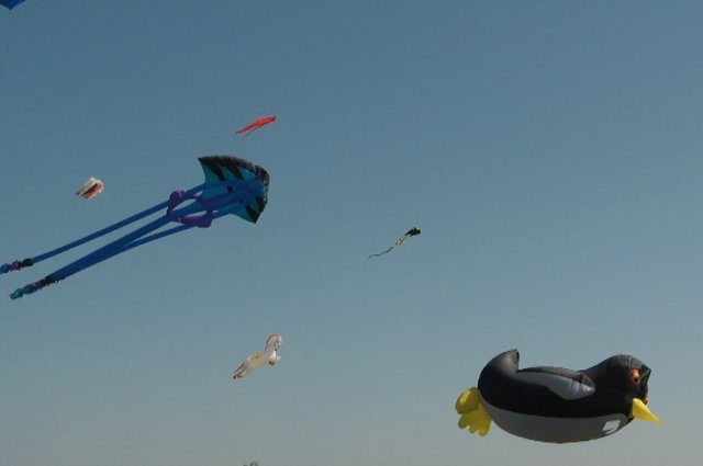 Display kites at Kite Komotion 2013